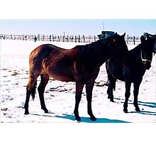 Sister Mare Wait for X-Mass Photographic Print