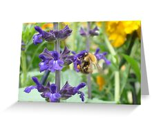 Bumble bee on Salvia Greeting Card