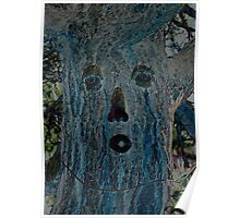 Ponderosa Pine Tree Poster