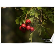 Beauty Is Everywhere!  Poster