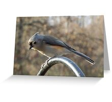 Portriait - Tufted Titmouse Greeting Card
