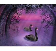 Swan River Photographic Print