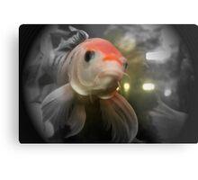 Closeup of a Goldfish Metal Print