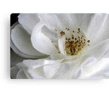 white flurry Canvas Print