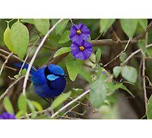 Bluey King Photographic Print