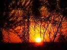 """Hidden Dawn"" by debsphotos"
