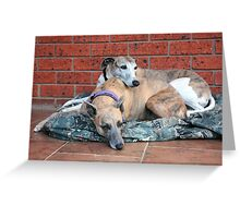 m&d Cleo & Connor August Greeting Card