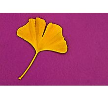 Ginkgo Compliment. Photographic Print