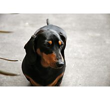 m&d Cooper October Photographic Print
