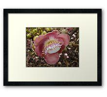 Cannon Ball Tree blossom Framed Print