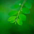 Green by Keith G. Hawley