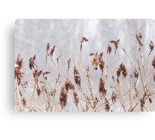Robins in Winter 2 Canvas Print