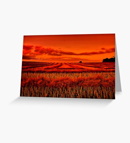 """Morning!! - After The Harvest"" Greeting Card"