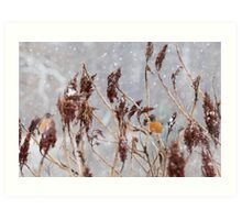 Robins in Winter 6 Art Print