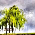 Pond Willow by Robyn Carter
