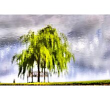 Pond Willow Photographic Print