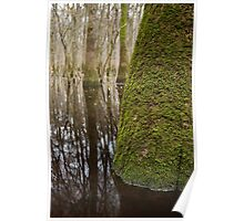 Champion Swamp Tupelo – Congaree National Park, South Carolina Poster