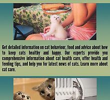Information About Kittens by revilsoy