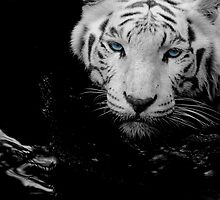 Tigers Gaze by Charles Adams