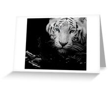 Tigers Gaze Greeting Card