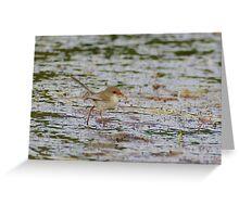 Lake Edward Wrens Greeting Card