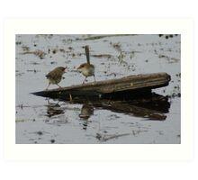 Lake Edward Wrens Art Print