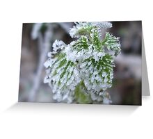 FROSTED NETTLE Greeting Card