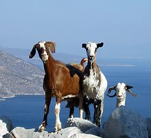 Happy Goats by eleni dreamel
