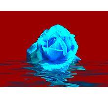 Rose #5 Photographic Print