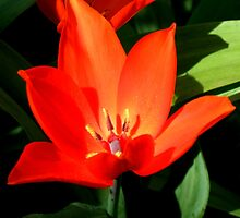 Flower by becks78