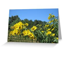 Sonoma Vineyard With Daisies Greeting Card