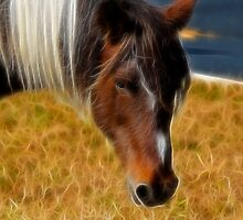 Old Mare by Trudy Wilkerson