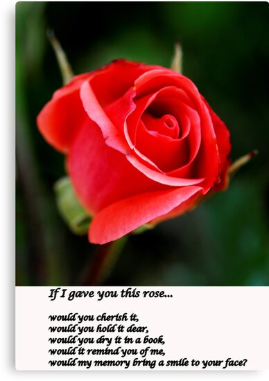 To Give You a Rose by J. D. Adsit