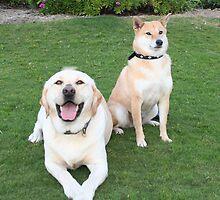 Nelson & Roxy by Kristin Hamm