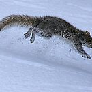 Squirrel in Action!! by jozi1