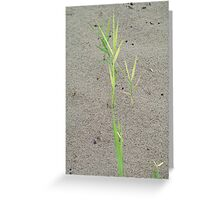 Green spikes Greeting Card