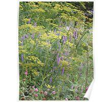 Wild Flowers - Byway, Lanesboro Poster