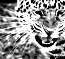 Amur Leopard Snarl by evmphotos