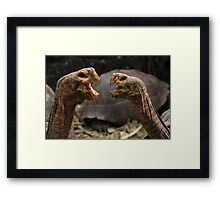 Dueling Tortugas  Framed Print