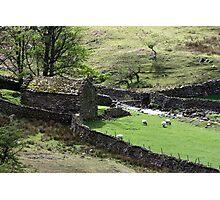Shepherds Delight Photographic Print