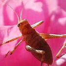 Grasshopper by Julie Sherlock