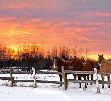 December Sunrise by Andrea Austin