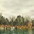 Mallard Duck Family by Walter Colvin