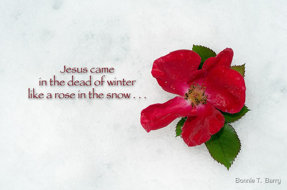 Jesus came in the dead of winter like a rose in the snow by Bonnie T.  Barry