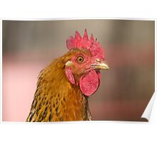 hen in the farm Poster