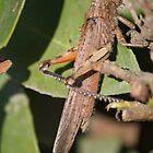 giant grasshopper by spetenfia