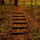 Wonderous Walkway by Tracy Jule