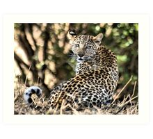 THE LEOPARD - Panthera pardus - Luiperd Art Print
