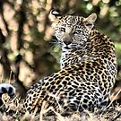 THE LEOPARD - Panthera pardus by Magaret Meintjes