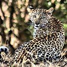 THE LEOPARD - Panthera pardus - Luiperd by Magaret Meintjes